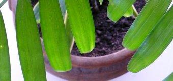 Maintenir l'humidité des plantes avec des glaçons