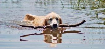 Votre magazine en ligne préféré sur les chiens
